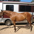 Drop dead gorgeous WB dressage prospect