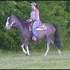 Beautiful, And Flashy TWH/BEA Blue Roan Trail Mare
