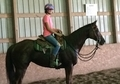 Super cute Thoroughbred mare doing great under saddle!  She continues to enjoy learning arena work and is looking to move forward in her training and new discipline.  Extremely versatile.