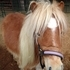 PRICE REDUCED TO $250-Beautiful Mini Mare For Sale