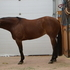 Check Out this Open/ Non Pro Caliber Reining Mare