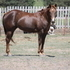 Reining, Working Cow, Roping daughter of Wimpys little Step in foal to Severance Chex !