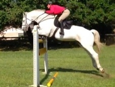 JUMPING Mare For Sale