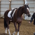Beautiful Talented Liver Chestnut with long socks Western or English Dressage mare Must See!