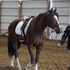 Easy Beautiful Western or English Dressage mare Must See!