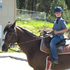 AMAZING KIDS HORSE, Used for the lesson program for beginners!