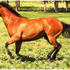Beautiful, Foundation Bred Mare for Breeding Lease.