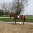 Flashy Dressage/Hunter for sale