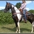 Flashy Black/White Tobiano Saddle Mare