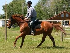 Catch 22- Trakehner gelding started undersaddle