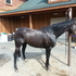 Wonderful Mover, Stunning Thoroughbred Gelding