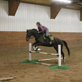 Dark bay thoroughbred mare for sale