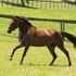 D'Eleganz - 2012 Oldenburg Filly by Donarweiss