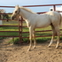 AQHA Filly by Im Suddenly Silver