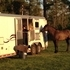 Hart 3horse trailer with LQ 30year anniversary.