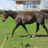 Gelding - Trail Broke - Ready to go in your direction!