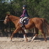 Sweet Quarter Horse Mare Perfect for Lesson Program or Family!