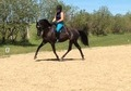 Stunning mare with jumping & dressage experience