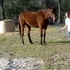 10 YO QH gelding has a good handle and a good disposition
