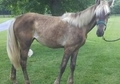 ** GORGEOUS YEARLING FILLY....TOP QUALITY PEDIGREE!! **