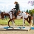 APHA 8 year old proven, high-end show gelding - Izzy Realy.
