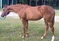 AQHA INCENTIVE FUND QUIET ALL AROUND PROSPECT