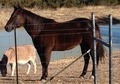 All Around Solid Foundation AQHA Mare for sale
