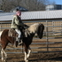 Bay Tobiano Reg. Spotted Saddle Horse. Trail Riders Deluxe.