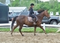 SOLD!! Ex-lesson horse looking for a new job! for sale