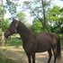 Beautiful TWH for sale