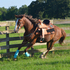 Tall, Athletic Mare for Lease - Experienced Riders