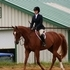 Equitation/Jumper FOR SALE