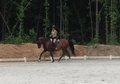 Arabian Cross Sporthorse mare