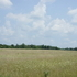 82 Acres Pasture, Tillable & Timber Ground