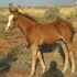 Awsome  Filly, DUAL PEP, PLAYGUN,