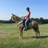 Playful Palomino Paso Fino Gelding in Tennessee