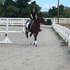 OTTB Mare for Lease