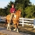 Intelligent Responsive Red Dun Paso Fino Pinto in Tennessee