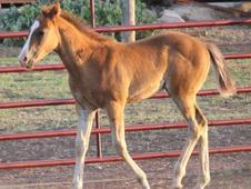 Streakin to fame colt for sale