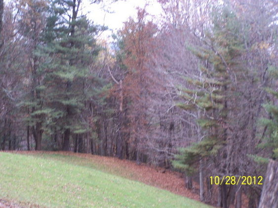5.65 Wooded Acres with 16X24 Garage