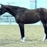 Very Fancy Filly, Beautiful mover and conformation