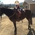 Fun Gaited Gelding