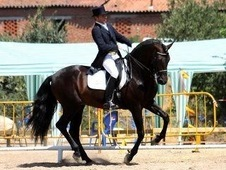 Andalusian Imports Spain, prestigious bloodlines, top quality