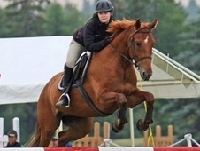 Wage- 16. 2hh amazing gelding- lots of jumping TALENT! ! !