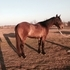 Well Started, Athletic Colt (Ranch Horse Prospect)