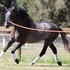3year old Andalusian Excellent Dressage, Sporthorse prospect