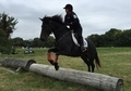 Fun young horse with jump, xcountry and endurance trail experience