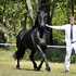 Beautiful Friesian Mare