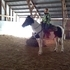 Beauty - Sell/Trade Beautiful Trail Horse! *PRICE REDUCED*