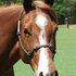 Beautiful, Sweet Minded AQHA Mare